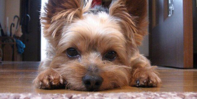 The Hidden Cost of Buying a 'Purebred' Dog From a Breeder | PETA