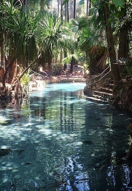 This mystical gem is Mataranka Thermal Pools, the water is warm, clear and oh so soothing! ... Northern Territory Australia