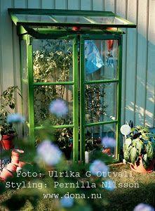 Bygg växthus av gamla fönster Lyckas! / Allers Trädgård