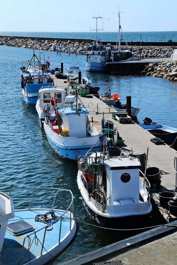 Hvert år lander fiskerne 40.000 ton jomfruhummere på havnen på Læsø. Der er både store og, som her, en række mindre fiskerbåde. Læsø fiskeindustri er verdensførende med jomfruhummere, og har et datterselskab i Skotland.