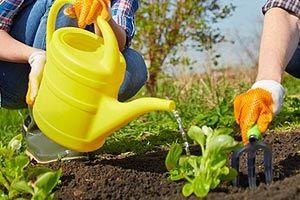 Ce trebuie făcut în livadă și în grădină în luna iunieна abekker.ru