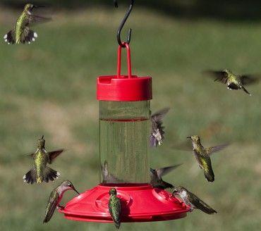 Songbird Essentials Dr. JB's 16 oz Clean Feeder All Red Hummingbird Feeder