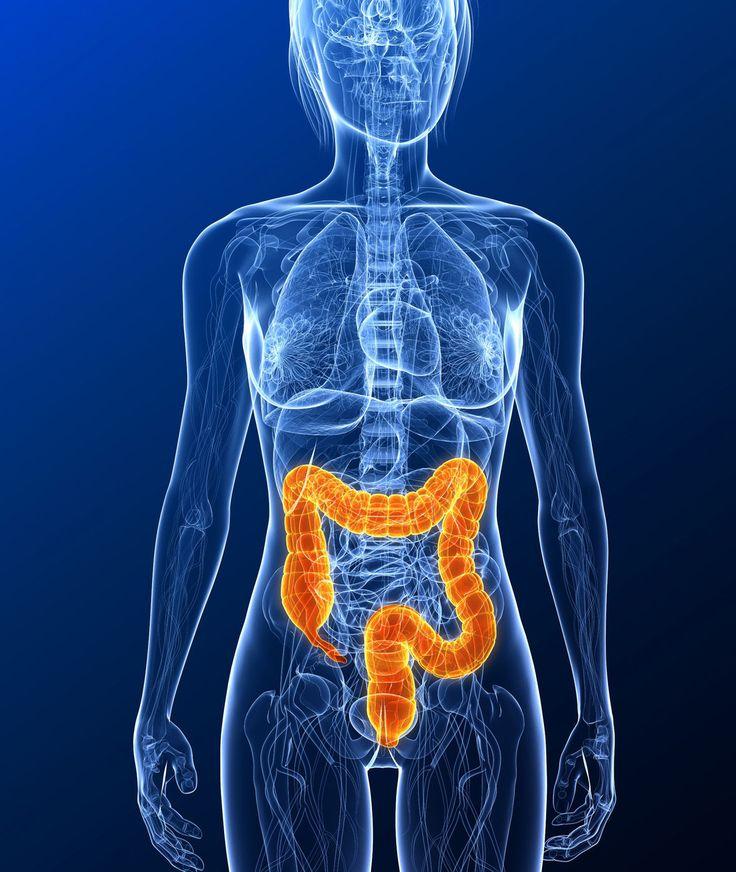 Dernier segment du tube digestif ; quifait suite à l'intestin grêle et s'étend de la valvule iléo-cæcale à l'anus. Appelé aussi :Côlon (impropre) Anglais :Large intestine Russe :Толстая кишка (…