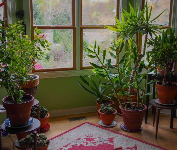 Sfaturi pentru ingrijirea florilor de interior
