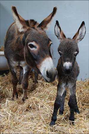 Donkey and babe.