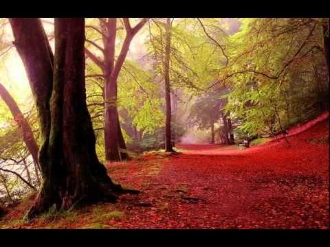 I Will Wait For You - cello - Hajime Mizoguchi ( Michel Legrand ) - YouTube