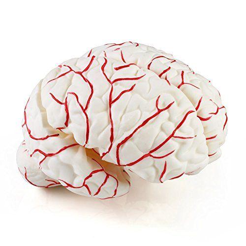 Anatomie Modell Gehirnmodell 8-teilig Kleinhirn