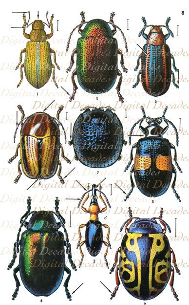 Vintage Beetle Illustrations -  Multicolor Insects Bugs Science Specimen Mount Entomology Nature Creepy Crawlers - Digital Image. $3.00, via Etsy.