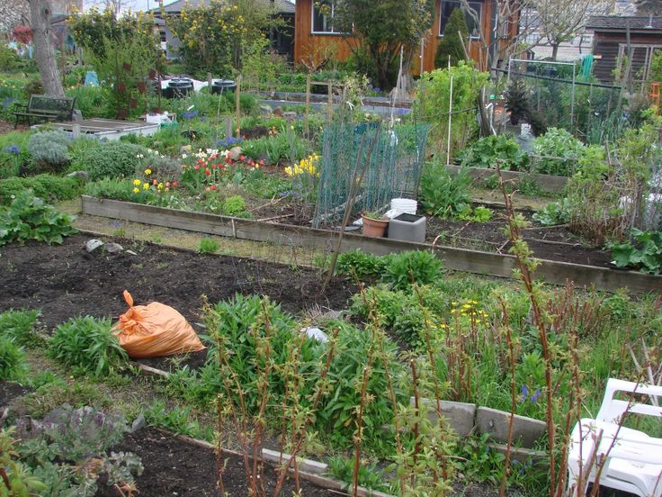 Image result for Urban Farming Foods