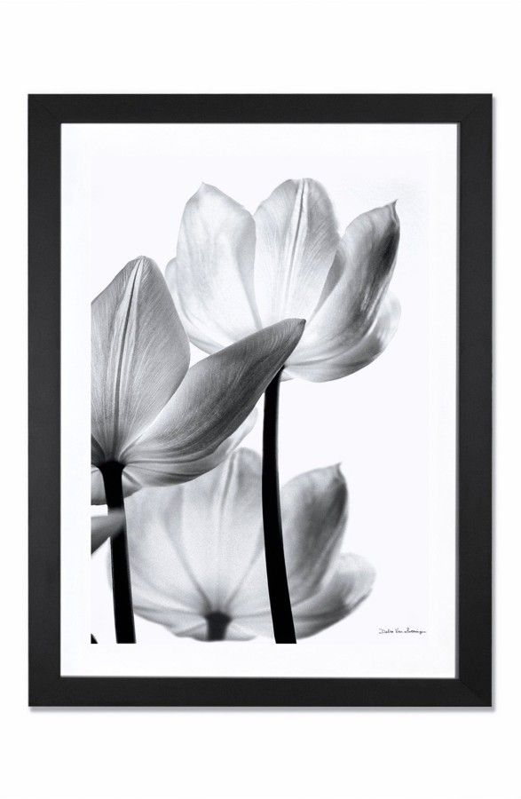 icanvas translucent tulip giclée print framed canvas art on icanvas wall art id=34780