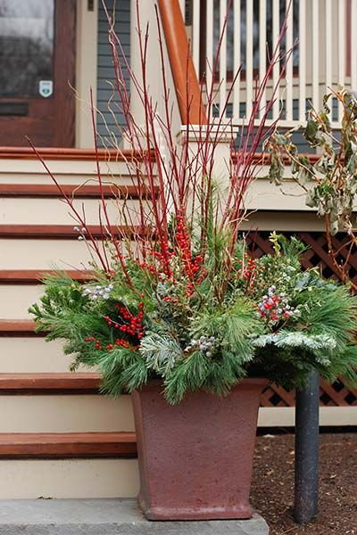624 Best Images About Winter Containers On Pinterest