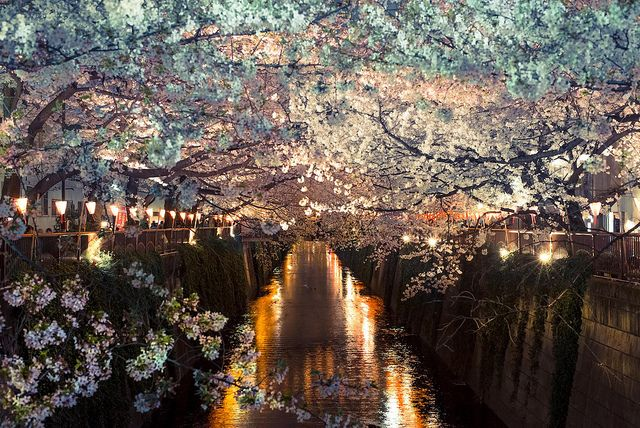 The Most Beautiful And Amazing Places In The World Hanami Sakura Cherry Blossom Japan Tokyo