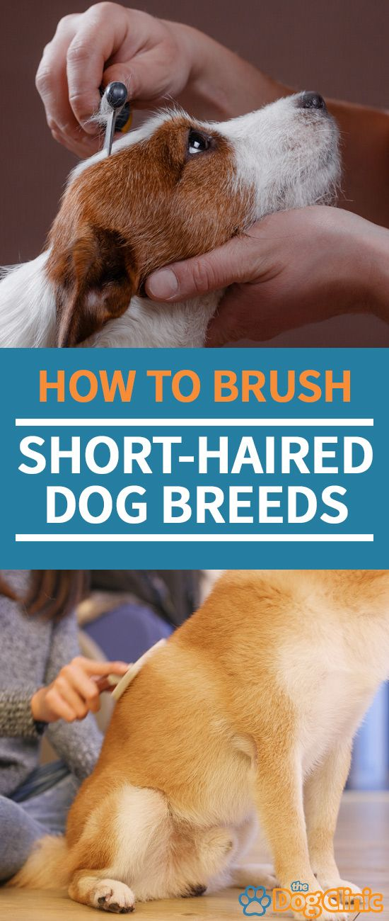 Brushing A Short Haired Dog Is Essential For Keeping Your Pet Clean And Maintaining A Healthy Coat Here Short Haired Dogs Dog Grooming Short Haired Dog Breeds