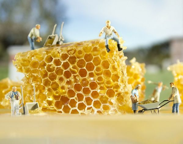 """Honey - Mead"" triptych from ""Small World/Lost Worlds"" series by Matthew Carden. Photo: Matthew Carden"