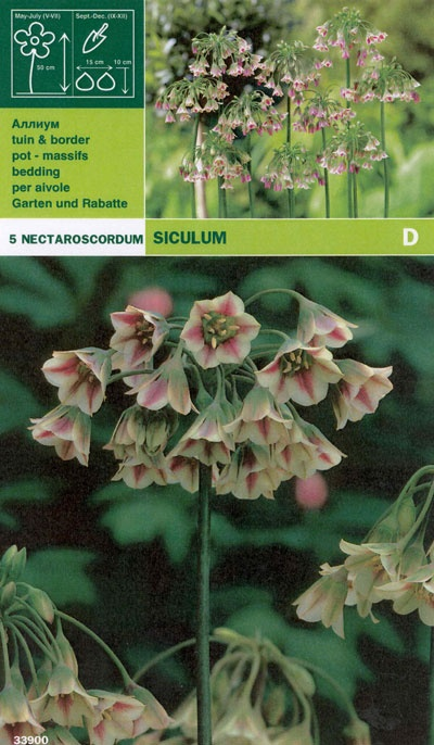 Allium 'Nectaroscordum':   (Nectaroscordum siculum)   Honungslök blommar med klockformade blommor i grönt, lila och vitt på en hög stängel i maj-juni. Mycket användbar i rabatter bland perenner. Blommorna brukar stå länge och är även vackra till snitt. Trivs bäst i ett halvskuggigt läge med fuktighetshållande men väldränerad jord. Kan odlas i stora delar av landet. Sprider sig med frö. Blir ca. 50 cm hög. Brukar lämnas i fred av rådjur, kaniner och harar. Lökstorlek 8/+. 5 lökar.