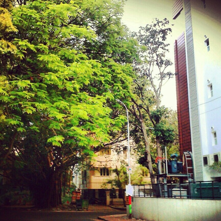 A tree that's taller than the building....pretty rare today...:P