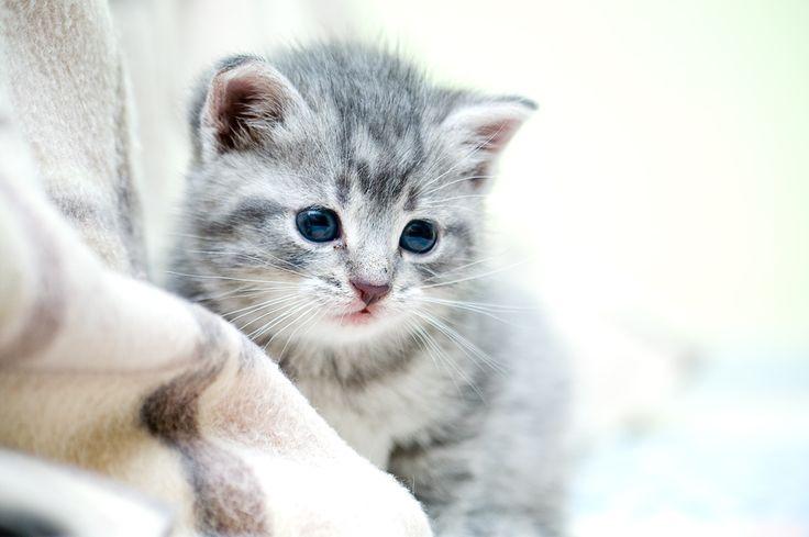 A little cat 2 by Dunadan-from-Bag-End.deviantart.com