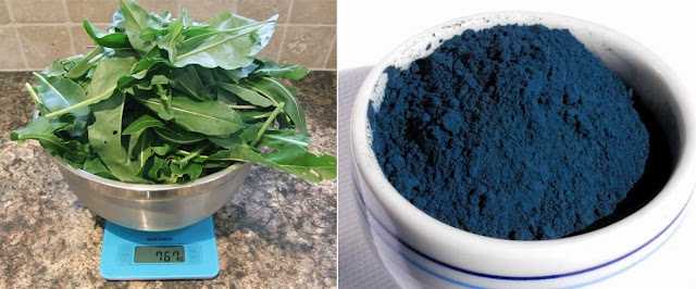 * Lovely Greens *: Extracting Woad...a Natural Blue Pigment