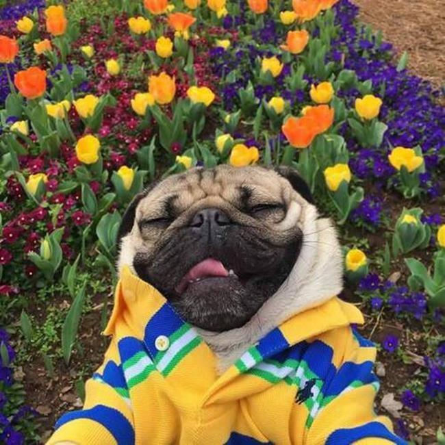 Sanatlı Bi Blog Köpek Yavruları ve Çiçeklerin Birleşiminden Oluşan 30+ Sevgi Dolu Fotoğraf 14