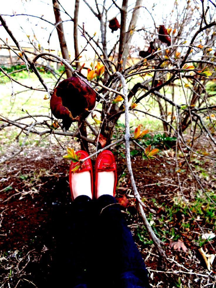 fiery soles in spring