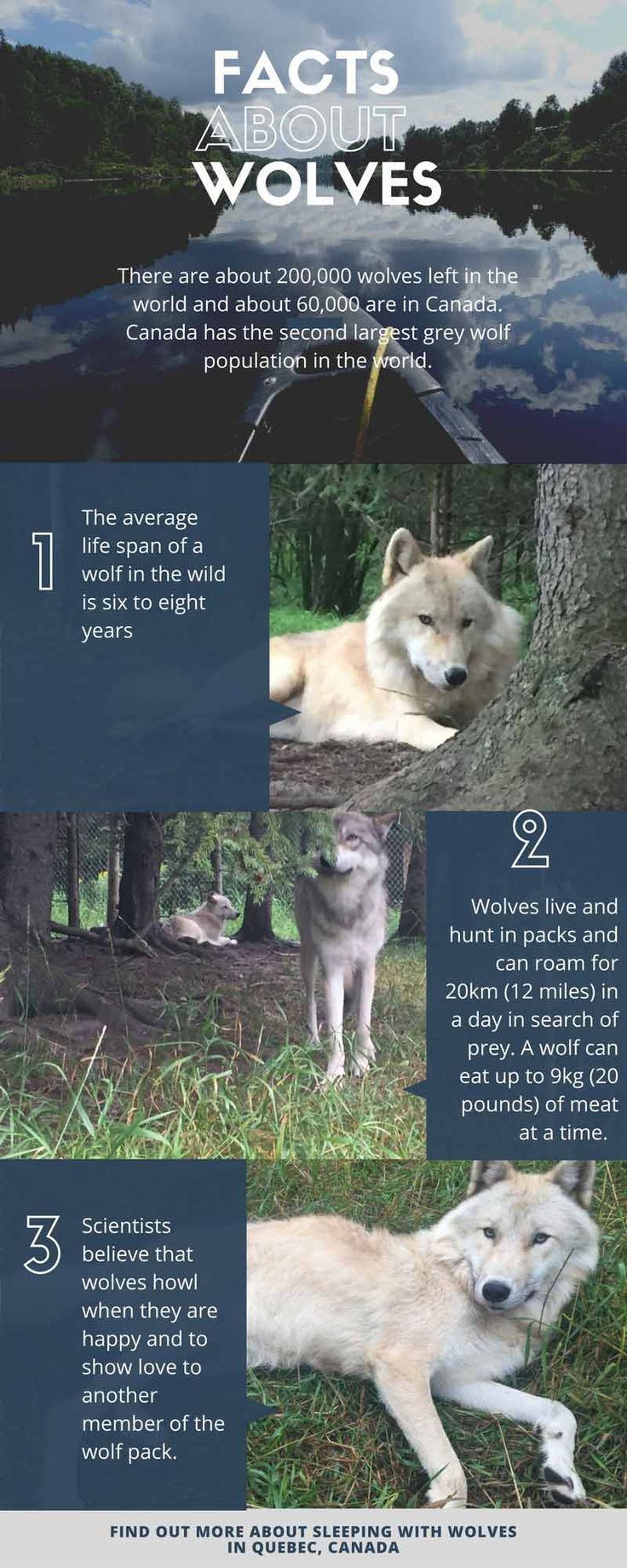 Sleeping With Wolves in Quebec Canada http://travel2next.com/sleeping-in-a-wolf-park-in-quebec-canada/?utm_campaign=coschedule&utm_source=pinterest&utm_medium=Travel%202%20Next&utm_content=Sleeping%20With%20Wolves%20in%20Quebec%20Canada