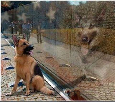 Military War Dogs.  They are a huge part in the success of our military.  Many war dogs  actually outrank soldiers.  They and their handlers have been a great asset to the US services.