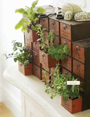 @Sweet Paul Magazine loves to plant in unexpected containers. This is a vintage display unit for nuts and bolts from a hardware store.    #antiques #collections #gardening