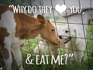 Why eat animals?