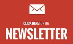 Ohana Dog_Blog: Setter puro in adozione