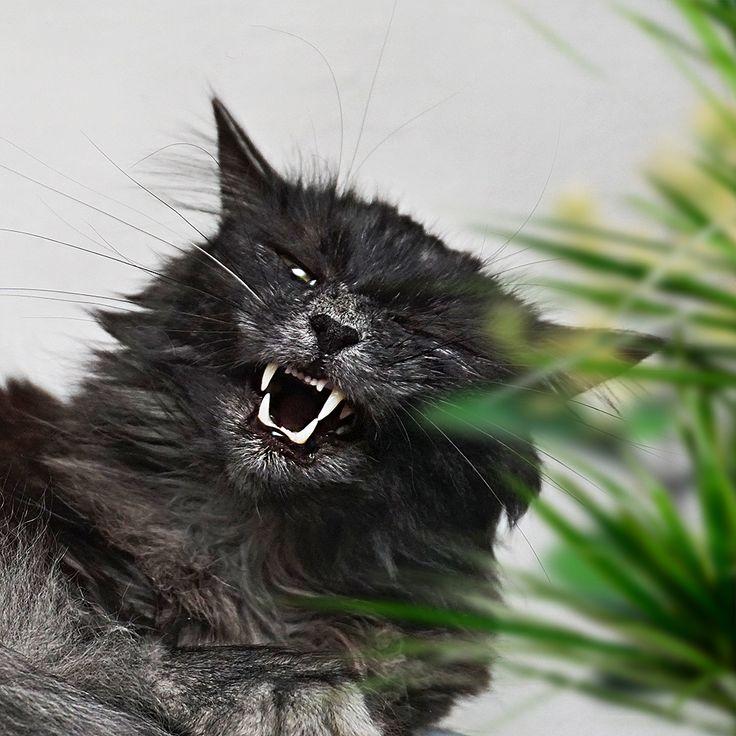 Who dares to wake me up?!!! Roaaar!!!