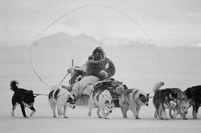 This 4,000 year lifestyle for the Inuit was shattered between 1950 and 1970 when a mass slaughter of Inuit sled dogs was conducted by Canadian police; first the Royal Canadian Mounted Police followed by the Quebec Provence Police.  The slaughter of 10 to 20 thousand sled dogs robbed the Inuit of their means of living a traditional life and their survival.  It led to depression, loss of dignity, substance abuse, disintegration of families, and near destruction of the Inuit society.