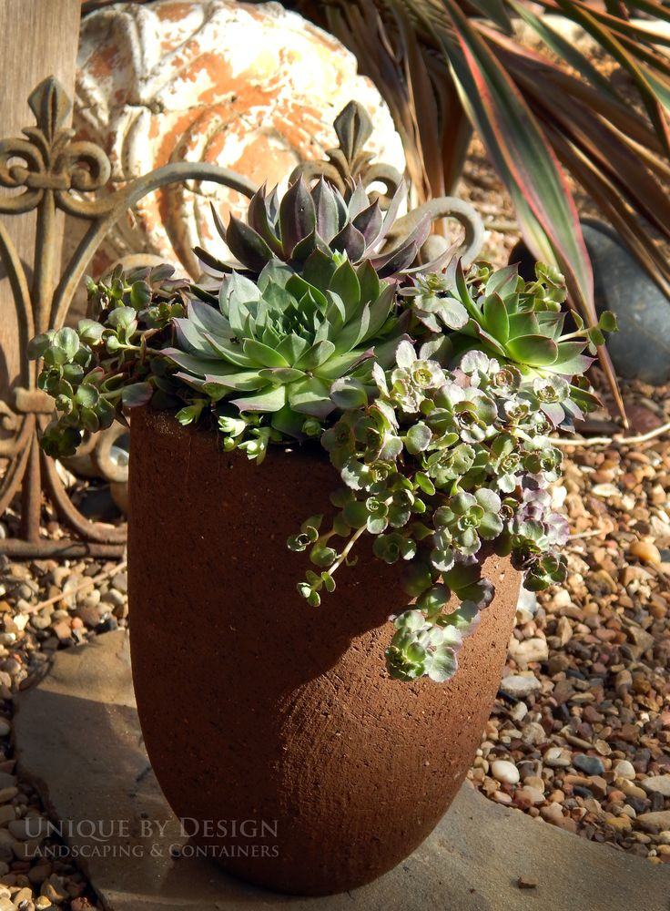 17 Best Images About Succulents On Pinterest Gardens