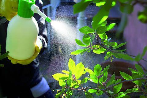 Risultati immagini per spruzzare sulle piante