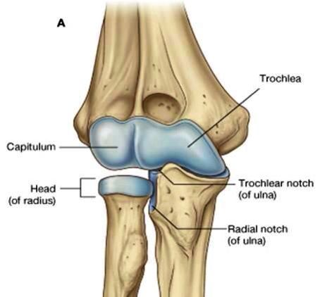 11 best mri images images on pinterest anatomy medical field and elbow joint ccuart Choice Image