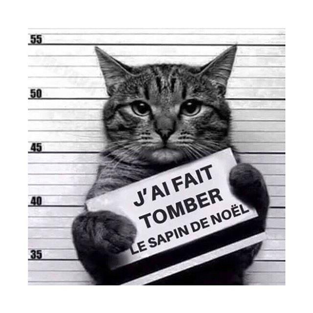 Qui a un potentiel coupable à la maison? #cat #catsofinstagram #catstagram #catoftheday