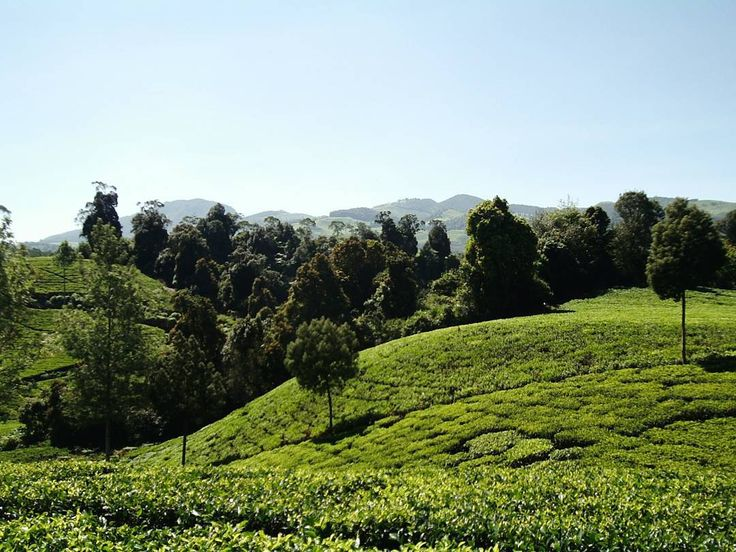 """Bising itu teredam, seakan malu bersuara  #hiking #hikingjabar #hamparanhijau #photograph #landscape #jawabarat"""