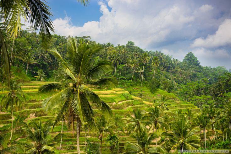Rizières de Tegalalang pres dUbud #rizieresBali #VoyageBali #BaliRizieresEnTerrasse