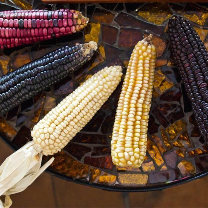 Una ONG, llamada Red Tsiri (maíz en purépecha), realiza catas para dar a conocer…