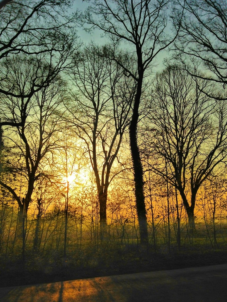 Silhouette tracery of trees