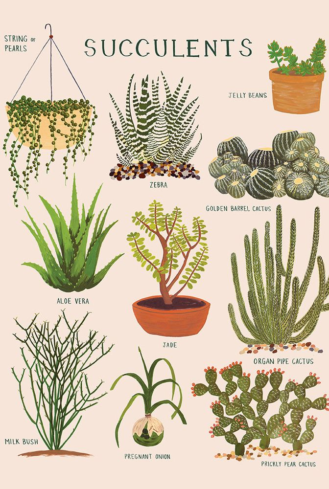 Know Your Succulents With Images Succulents Prints