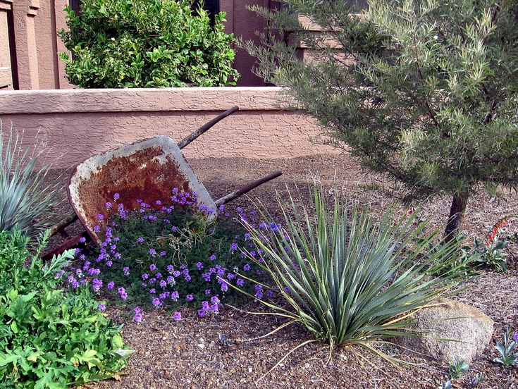 143 best images about xeriscape landscaping on pinterest for Xeriscape images