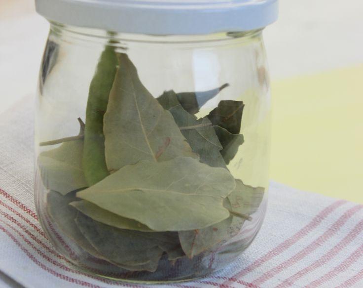 Im Handel findet man Lorbeer-Blätter meist getrocknet.