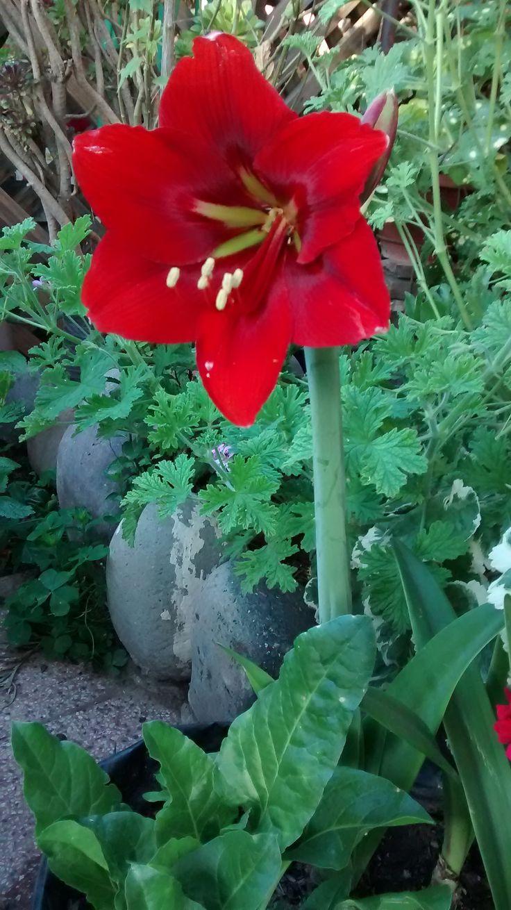 In my garden.