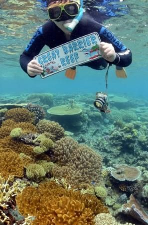 Cairns, #Australia: what an experience!..... http://www.tripadvisor.com.au/ShowForum-g255067-i460-Queensland.html