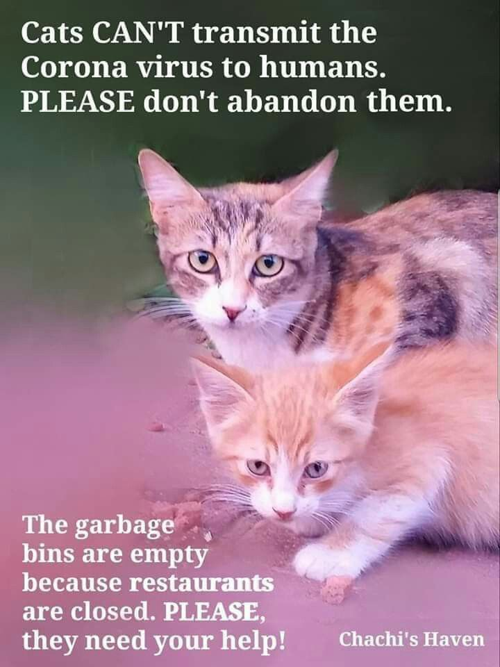 Pin By Roxann Weigleb On Animals In 2020 Cute Cats And Dogs Animal Advocacy Animals