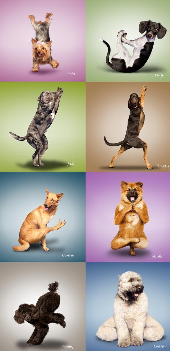 Yoga: Fevereiro 2013
