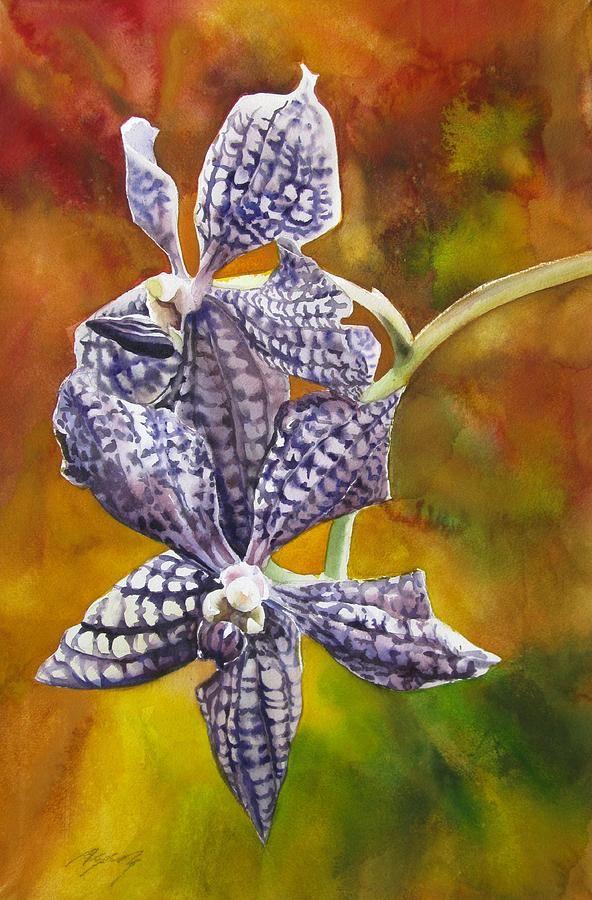 Vanda prchids vanda orchids for sale uk beautiful orchids care flowers 2 pinterest - Vanda orchid care ...