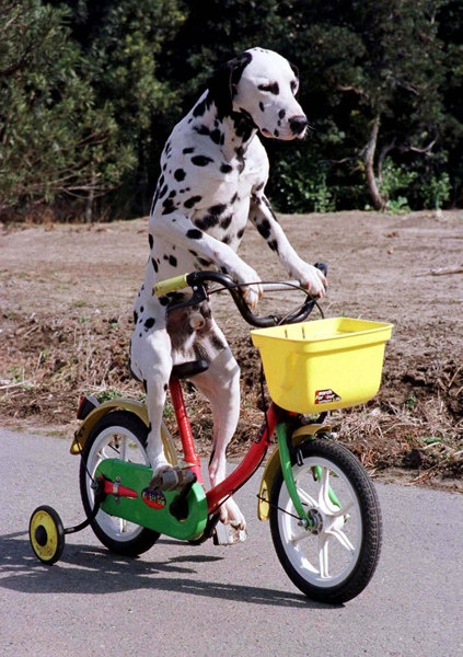 34 Best Cycling Pets Images On Pinterest World Basket And Beautiful
