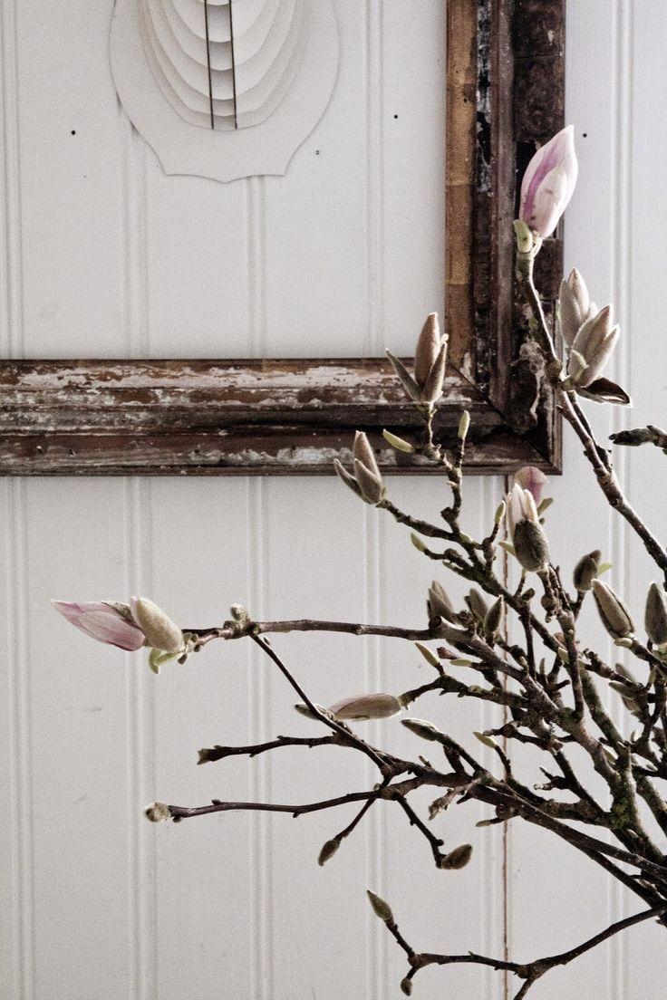 En av mina absoluta favoritblommor är magnolian. Skulle så gärna plantera ett stort träd någonstans i trädgården men vet inte var än=) Så ...