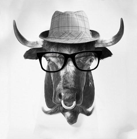https://i.pinimg.com/736x/6d/2b/16/6d2b16a7ebc25542b387d27ac958b109--funny-cows-mundo-animal.jpg